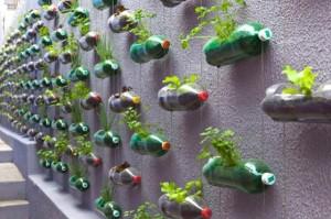 orto nelle bottiglie di plastica